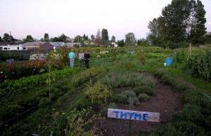 Marra Farm\'s Lettuce Link Garden
